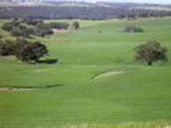 Wirrabara Golf Club Incorporated – Wirrabara Golf – Club, Course – Wirrabara Accommodation - South Australia